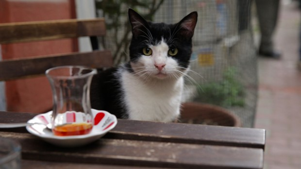 The Extraordinary Lives of Istanbul's Street Cats